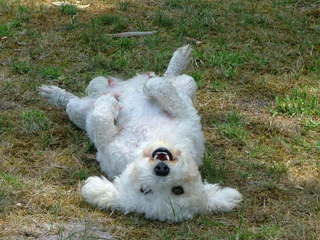 Dog Kennels Ballarat For Sale